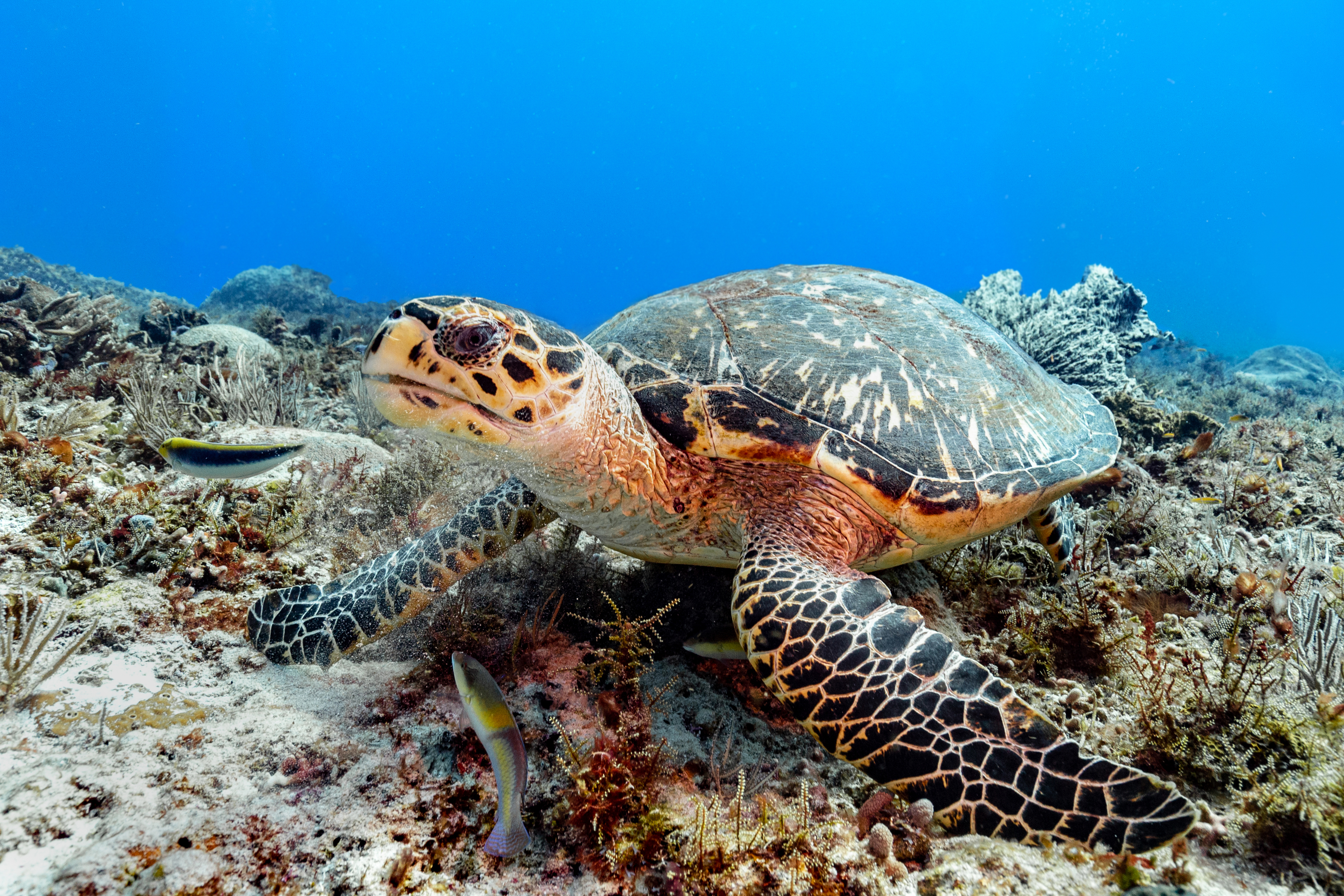 a0788d1dab https   www.smithsonianmag.com photocontest detail mobile on-the ...