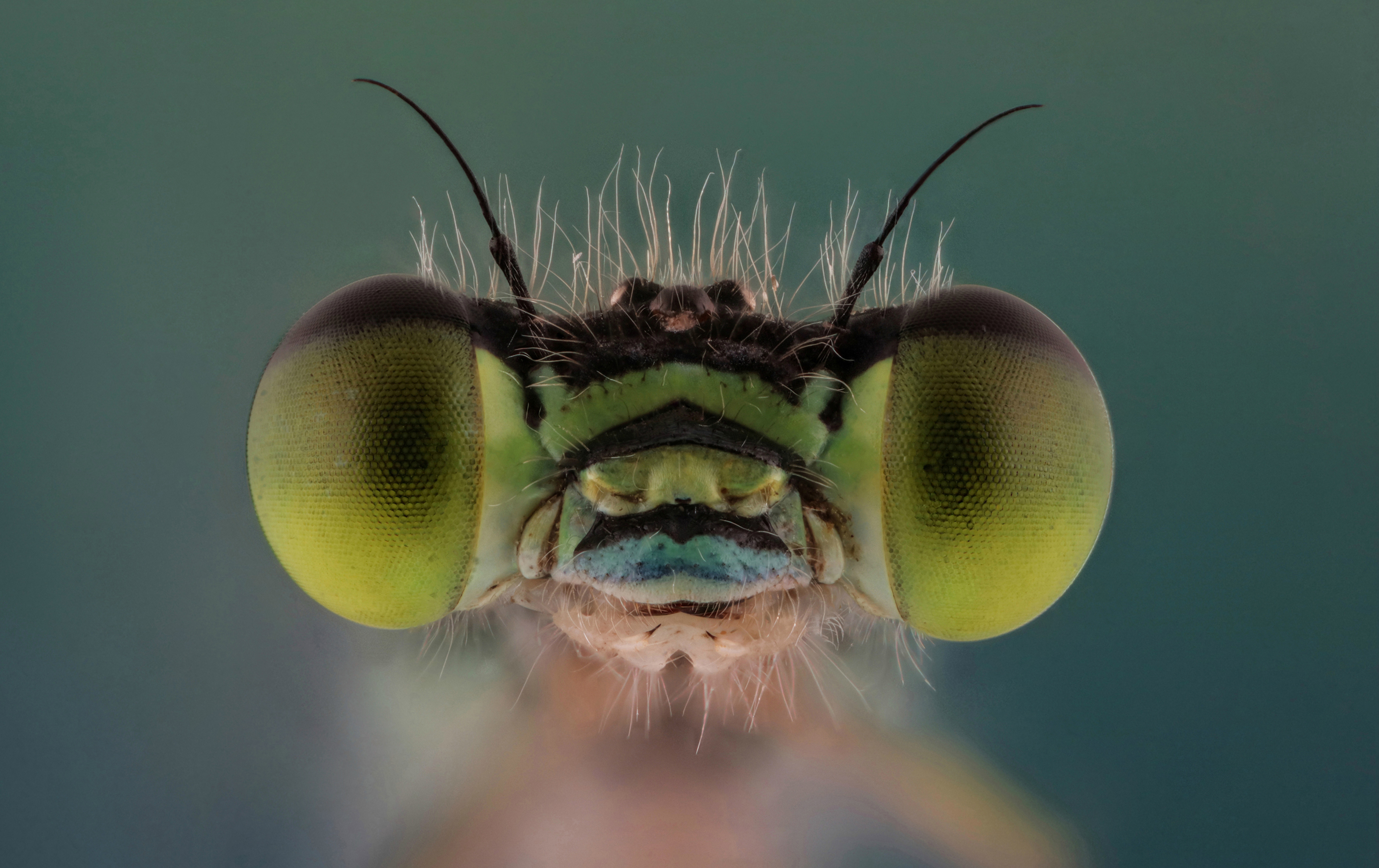 3d90a97f60a https   www.smithsonianmag.com photocontest detail mobile midwest ...