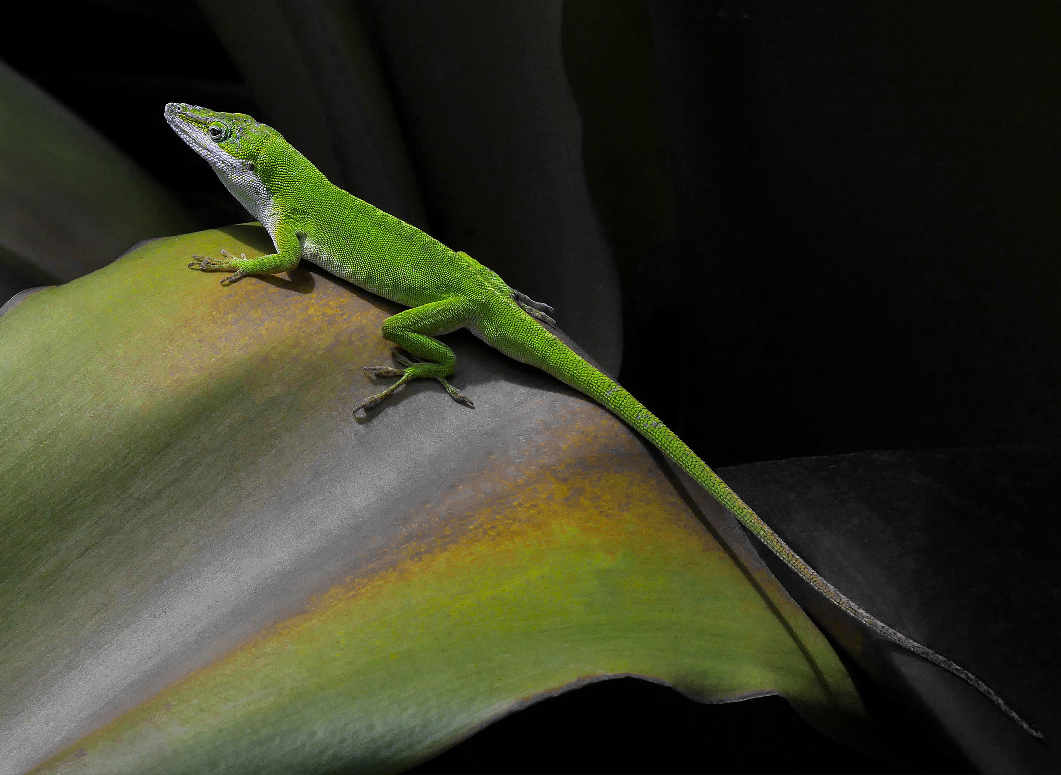 98e58a5f3 https://www.smithsonianmag.com/photocontest/detail/natural-world ...